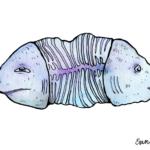 Din-III-Sticker-One-Fish-Two-Fish-1